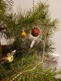 Aardingsplantenpin bij Kerstboom